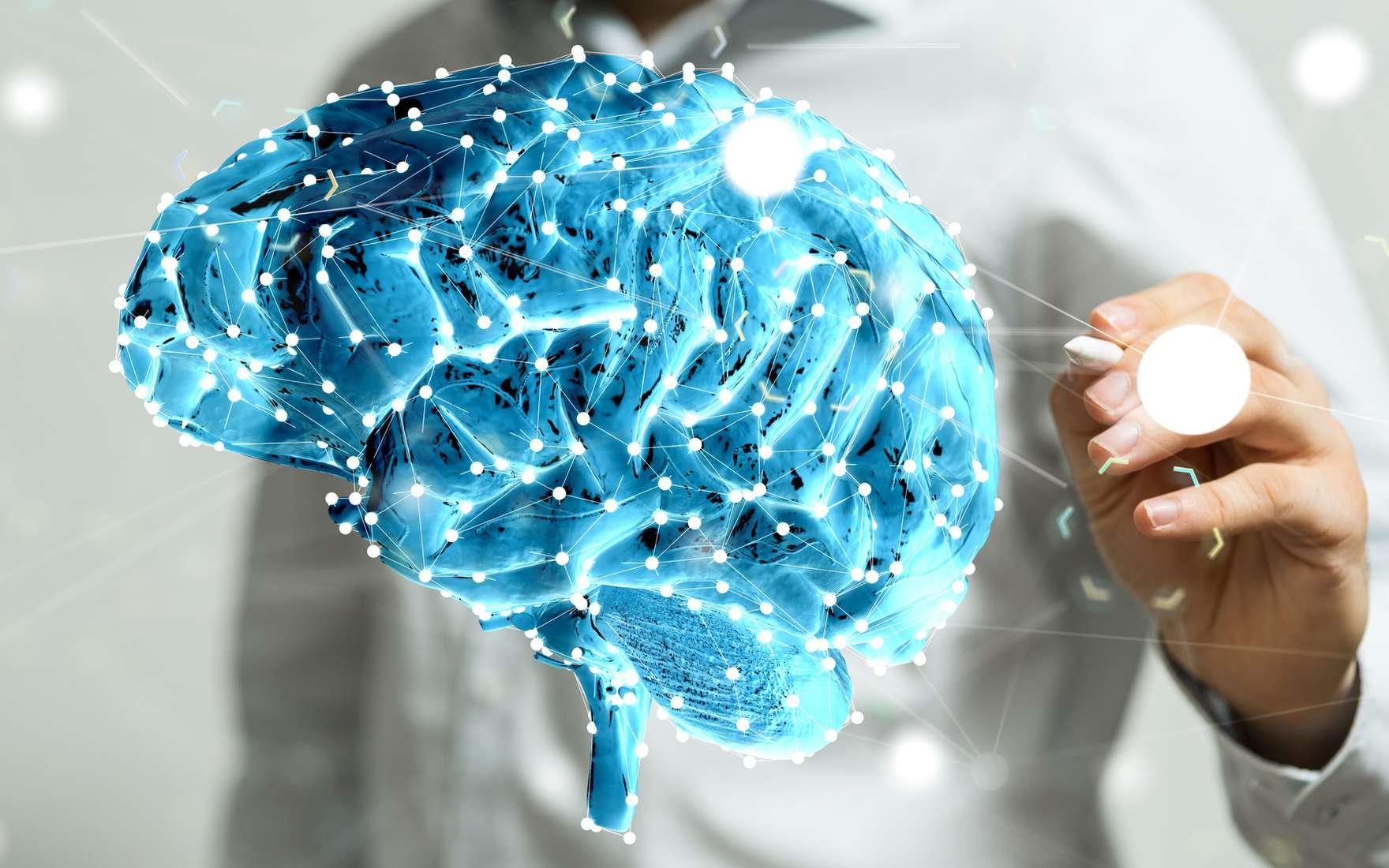 Le cerveau est-il un ordinateur quantique sophistiqué ? © vege, Fotolia