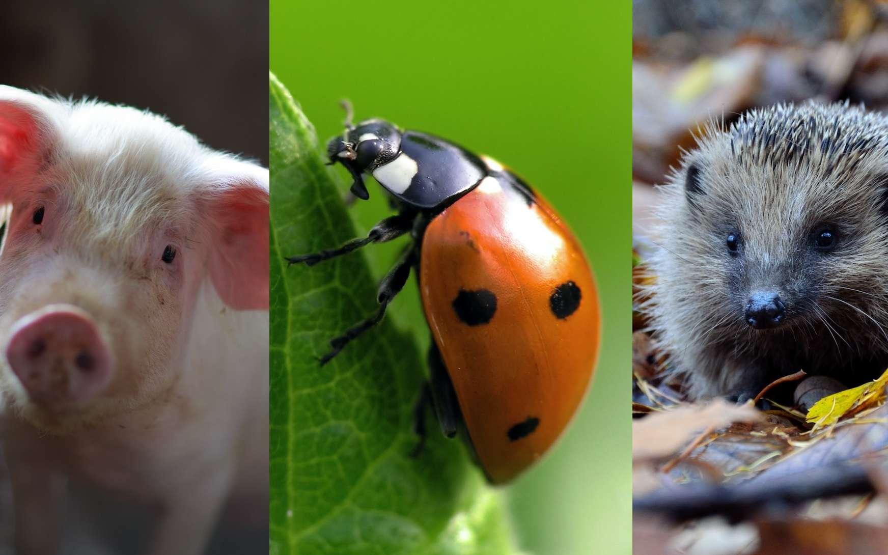 Le cannibalisme animal, un phénomène bien plus répandu qu'on ne pense. © Julian Dutton, Unsplash, Marek Kosmal, Adobe Stock, Piotr Łaskawski, Unsplash