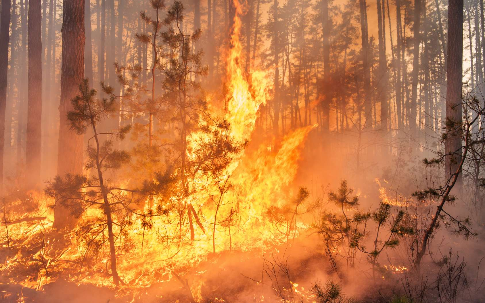 Les feux de forêt étaient très importants en 2015 et 2016. © gilitukha, fotolia