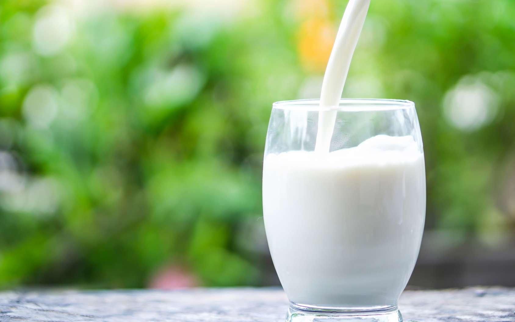 Les chercheurs se sont intéressés à l'effet des graisses du lait sur l'inflammation. © doucefleur, Fotolia