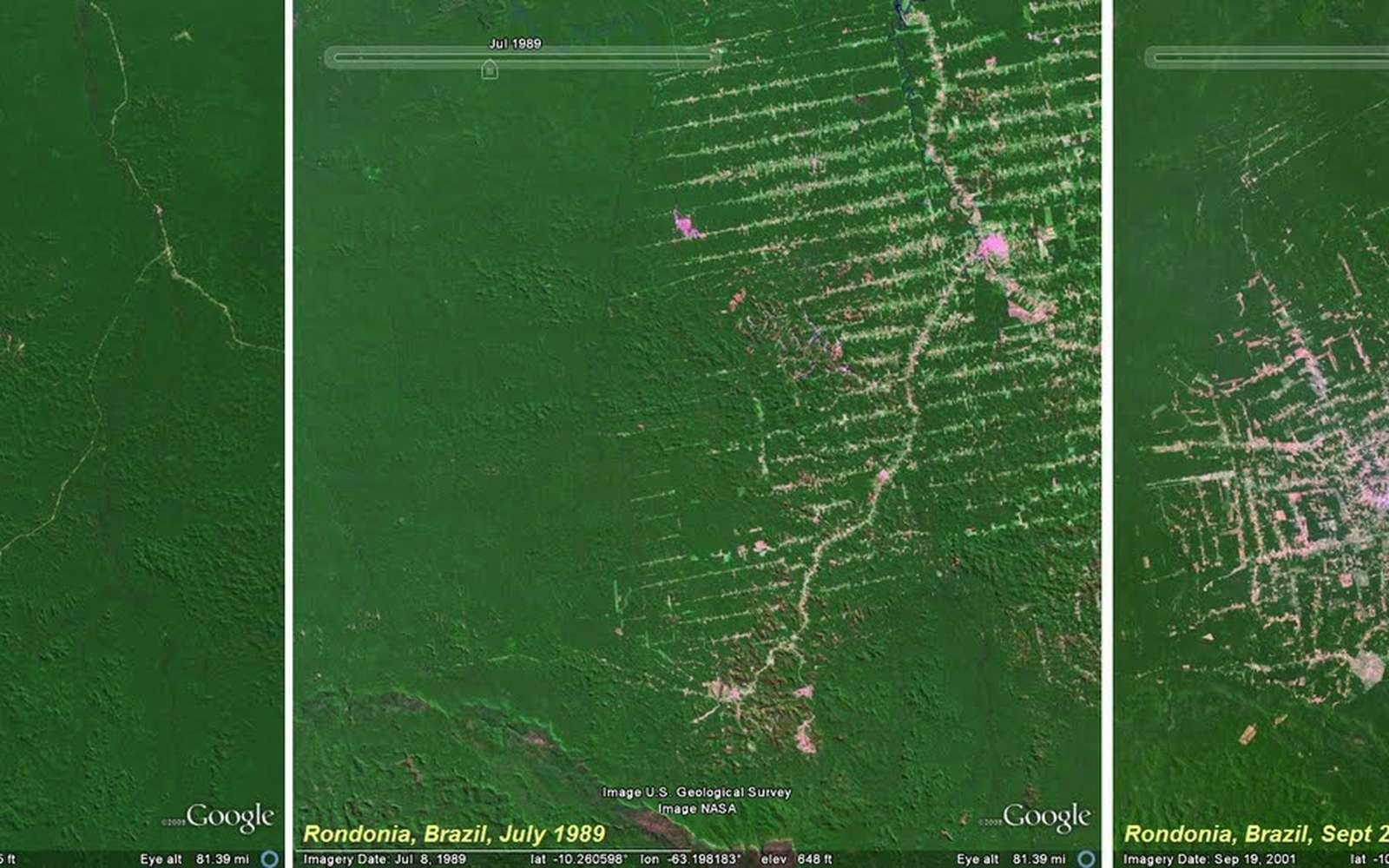 En 2010, le suivi de déforestation dans le monde sera accessible à tous. © DR