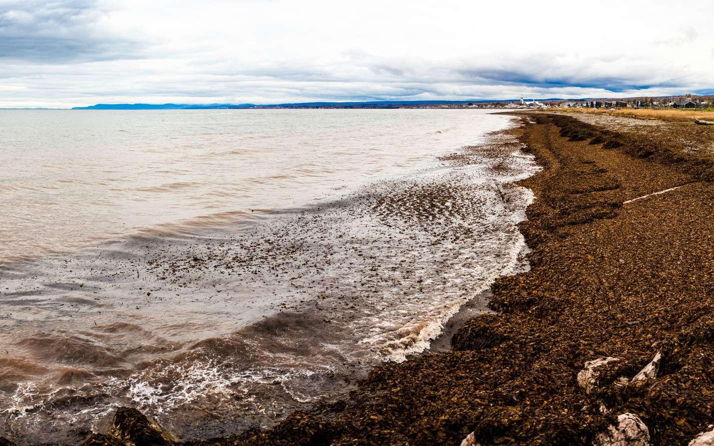 Panorama d'une plage recouverte d'algues en Gaspésie ©aetb