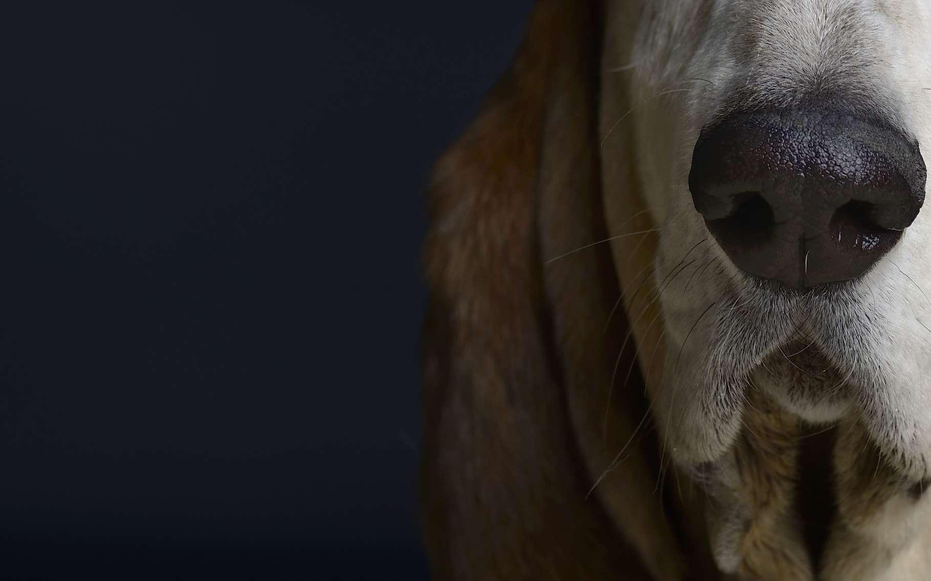 Ce détecteur de maladie rivalise avec le nez d'un chien - Futura