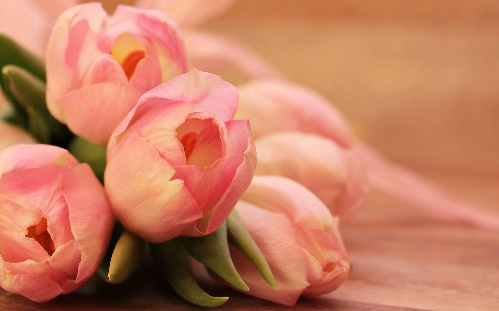 Des tons vibrants aux tons pastel, les tulipes colorent votre jardin. © Pixel 2013, Pixabay, DP