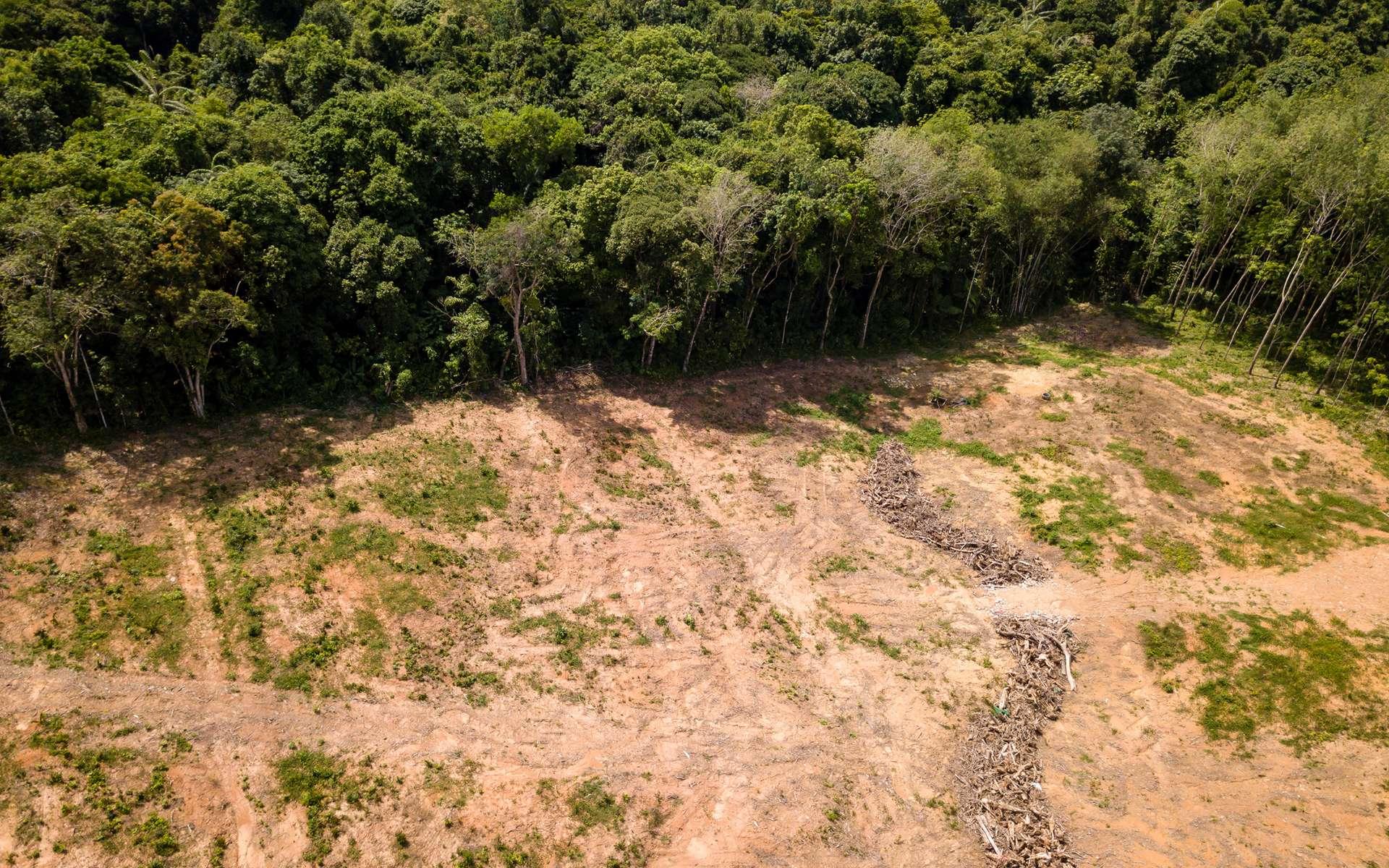 La déforestation en Amazonie brésilienne a plus de doublé en janvier 2020 par rapport au mois de janvier 2019. © Whitcomberd, Adobe Stock