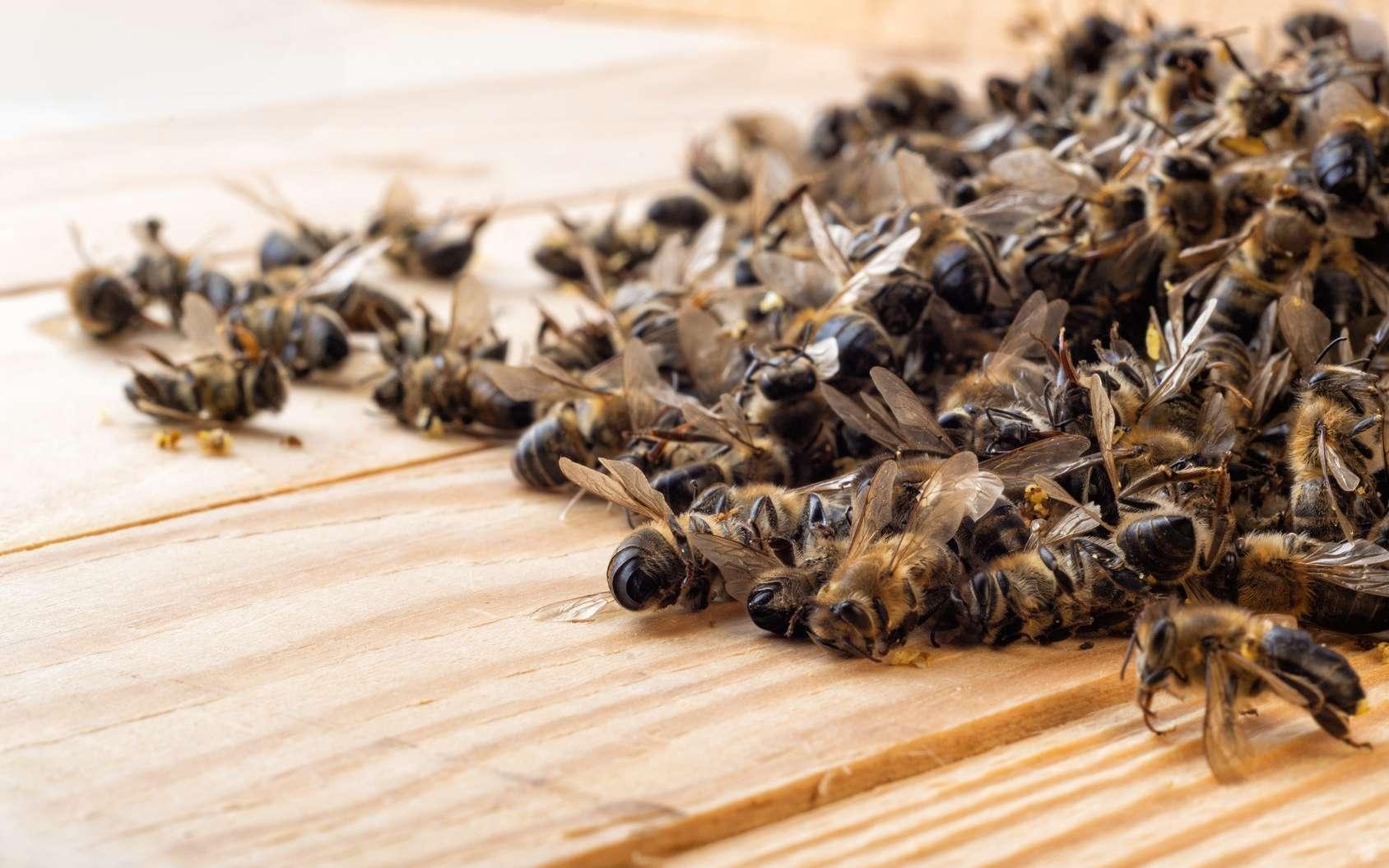 Les néonicotinoïdes sont accusés de participer au déclin des abeilles. © kosolovskyy, Fotolia