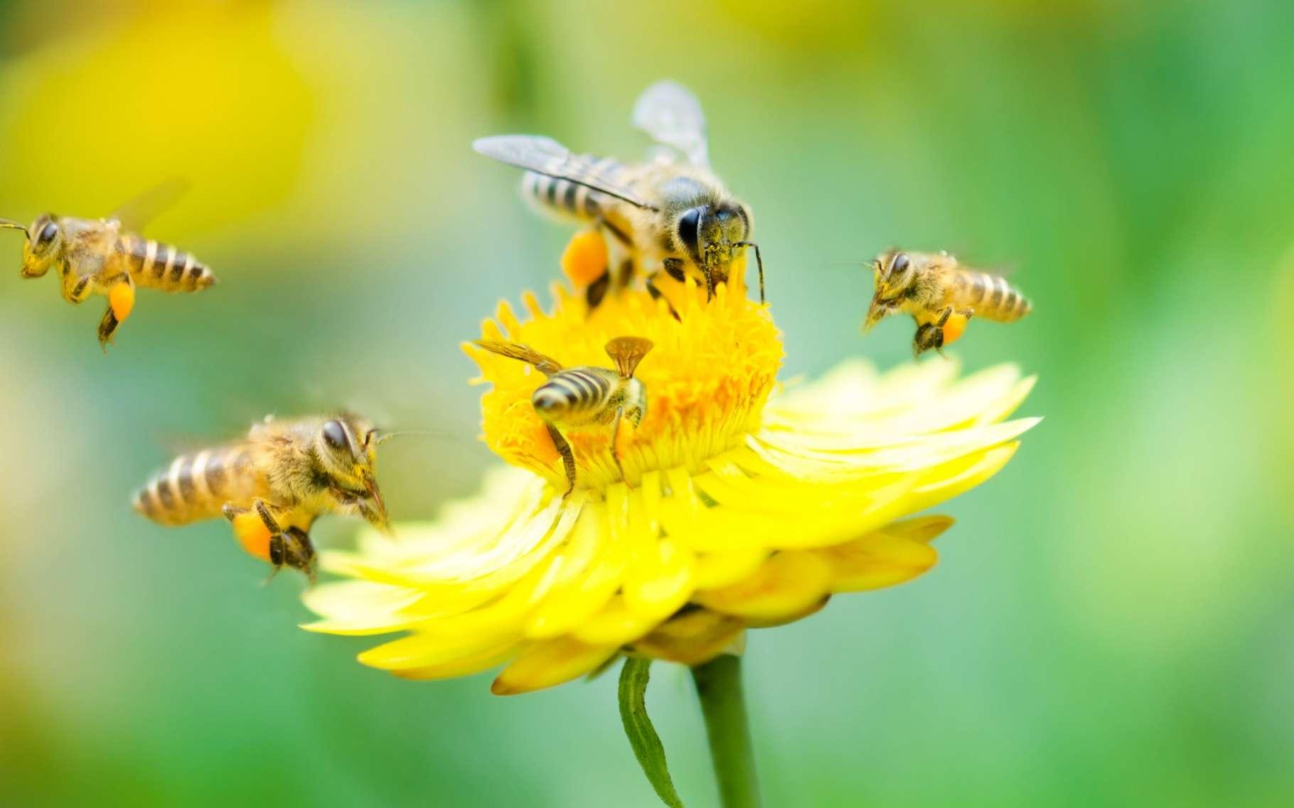 Pour la première fois, l'effet des insecticides néonicotinoïdes a été évalué dans la nature, sur une grande échelle de temps et d'espace. Le verdict confirme des résultats déjà obtenus en laboratoire ou en plein champ. © szefei, Shutterstock