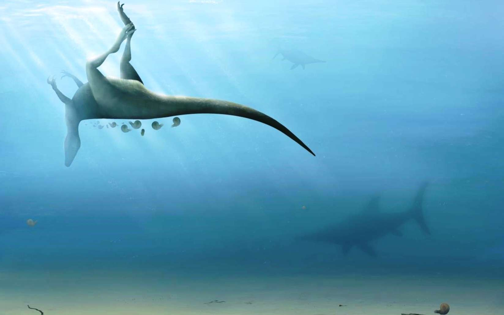 Une vue d'artiste du cadavre de Vectaerovenator inopinatus flottant sur les eaux d'une mer peu profonde. © Trudie Wilson