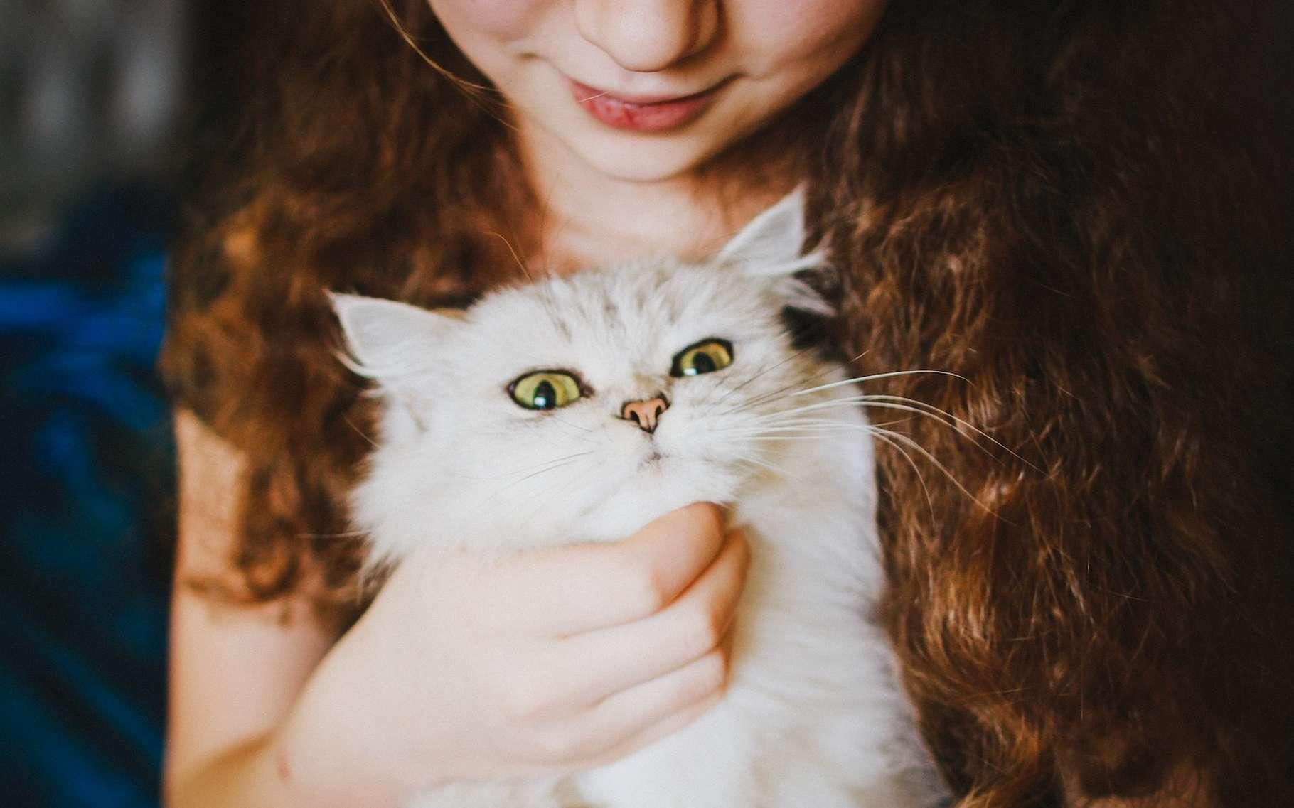 Des chercheurs sont parvenus à préciser le mode d'action de la toxoplasmose sur le cerveau. La maladie peut être contractée par contact avec des chats ou en mangeant de la viande mal cuite et issue d'un animal porteur. © Veronika Homchis, Unsplash