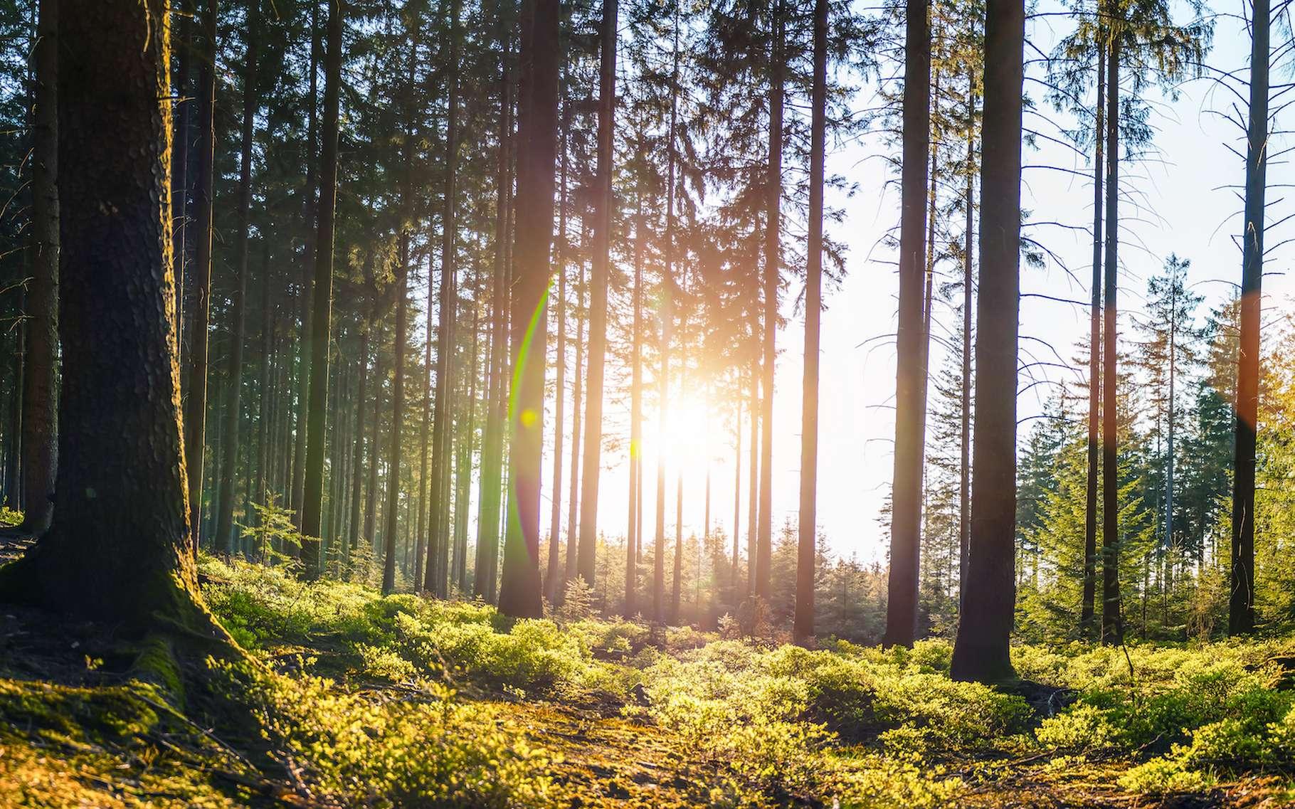 Des chercheurs de l'université de l'État de l'Oregon (États-Unis) ont étudié la capacité des forêts à limiter le réchauffement climatique. Leur aptitude à y résister aussi. Et à constituer un refuge de la biodiversité. Certaines forêts de l'ouest des États-Unis sortent du lot. © AA+W, Adobe Stock