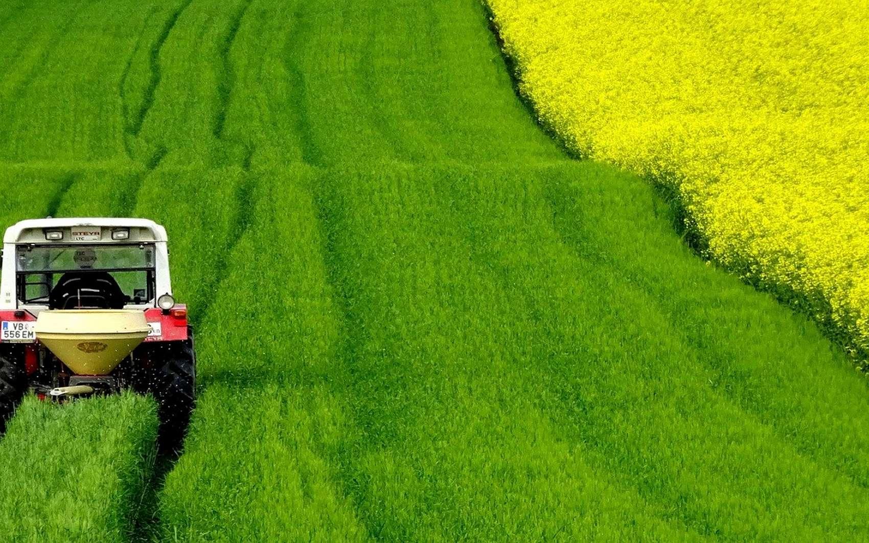 L'autosuffisance alimentaire n'est pas seulement la capacité de cultiver des aliments dans le pays ou dans une ferme, mais aussi celle d'acheter des aliments qui ne peuvent pas être cultivés localement © dengmo Pixabay