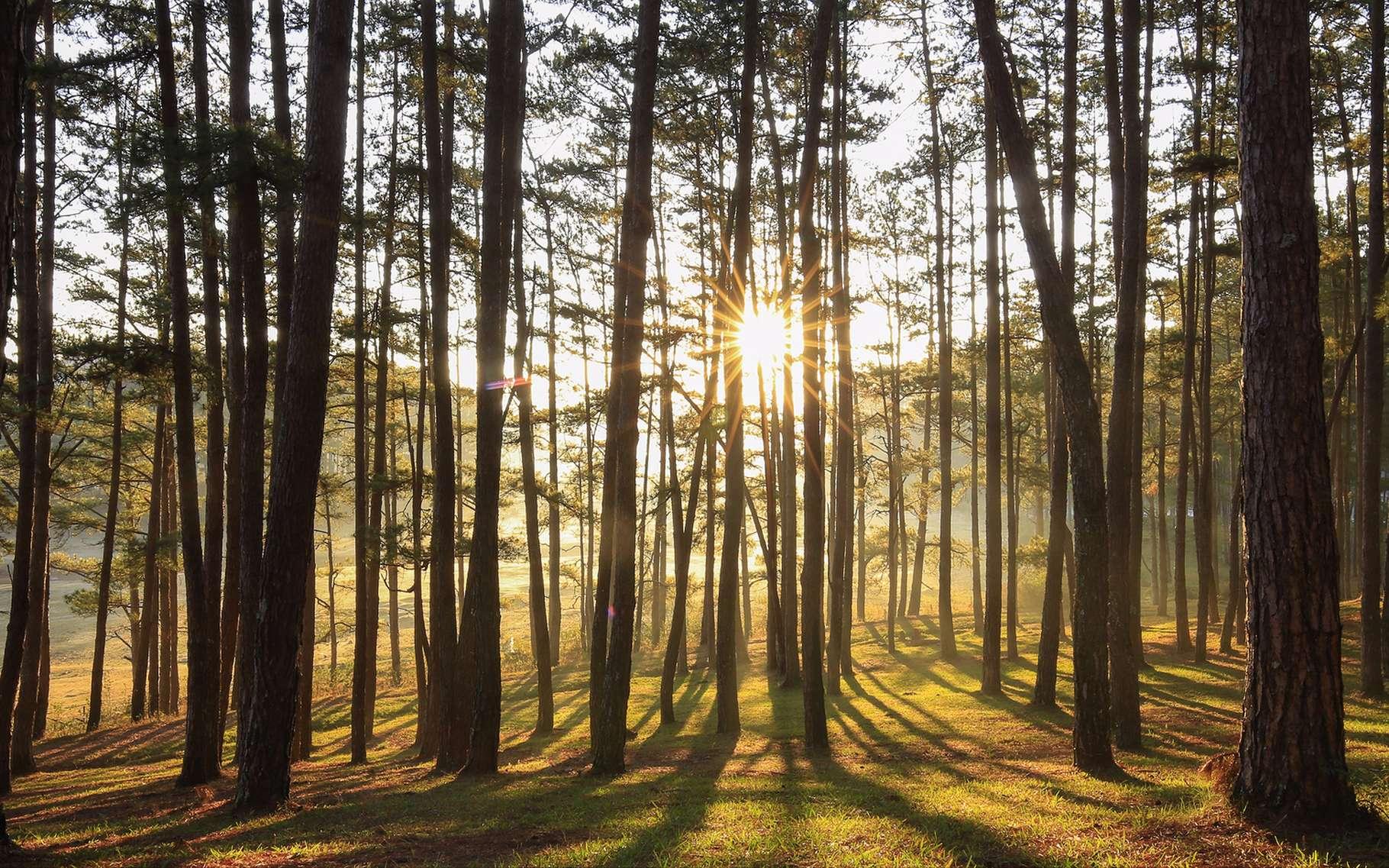 Les forêts ont un impact à la fois sur les microclimats et sur le climat global. © milestone, Shutterstock