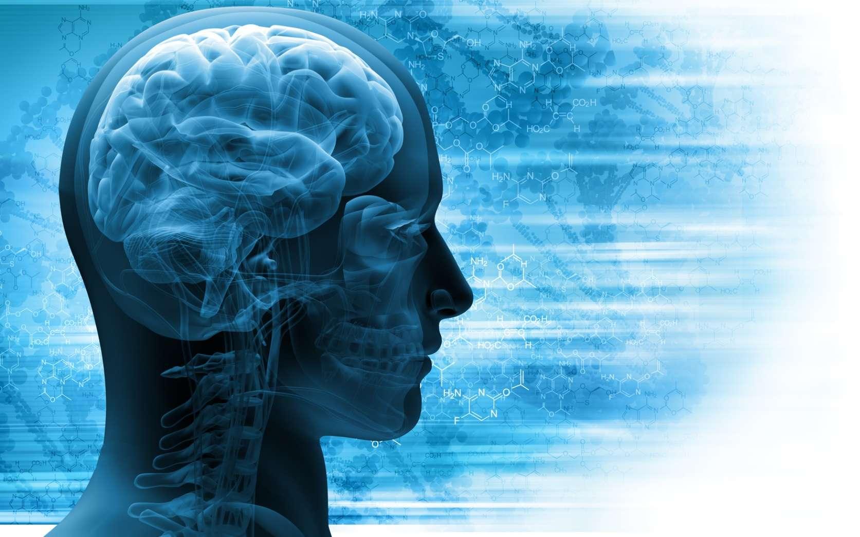 Le cerveau, l'ultime mystère de la Science. © adimas Fotolia