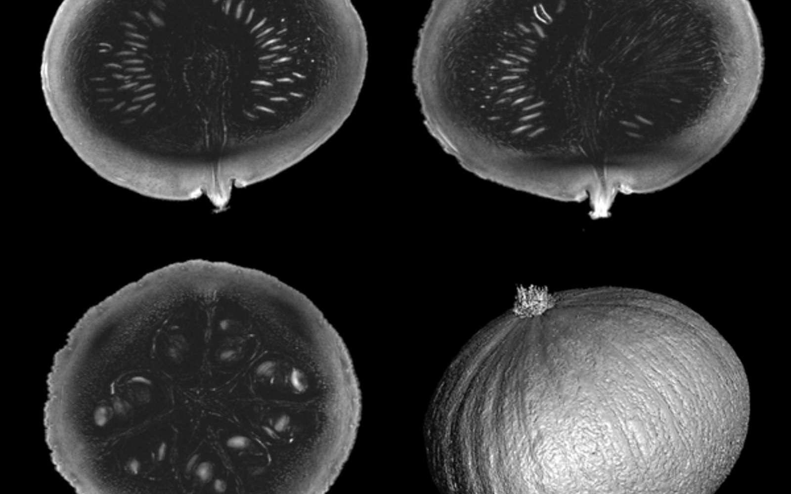 L'IRM le plus puissant du monde dévoile ses premières photos d'une précision inégalée thumbnail