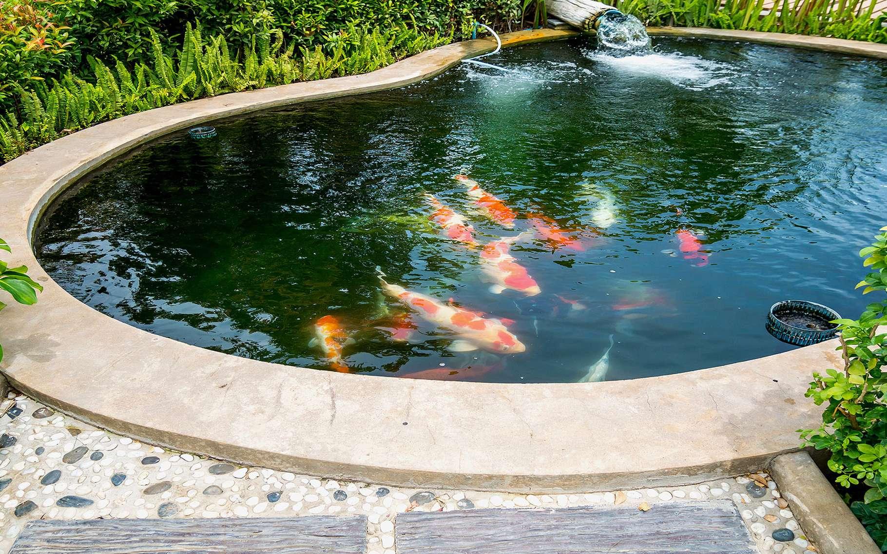 Construire Son Bassin De Jardin les bassins de jardin en béton | dossier
