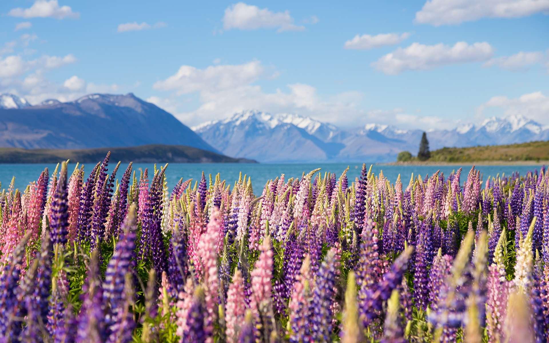 La Nouvelle-Zélande serait le pays le plus résilient en cas d'effondrement. © Wong Chun Wai, Adobe Stock