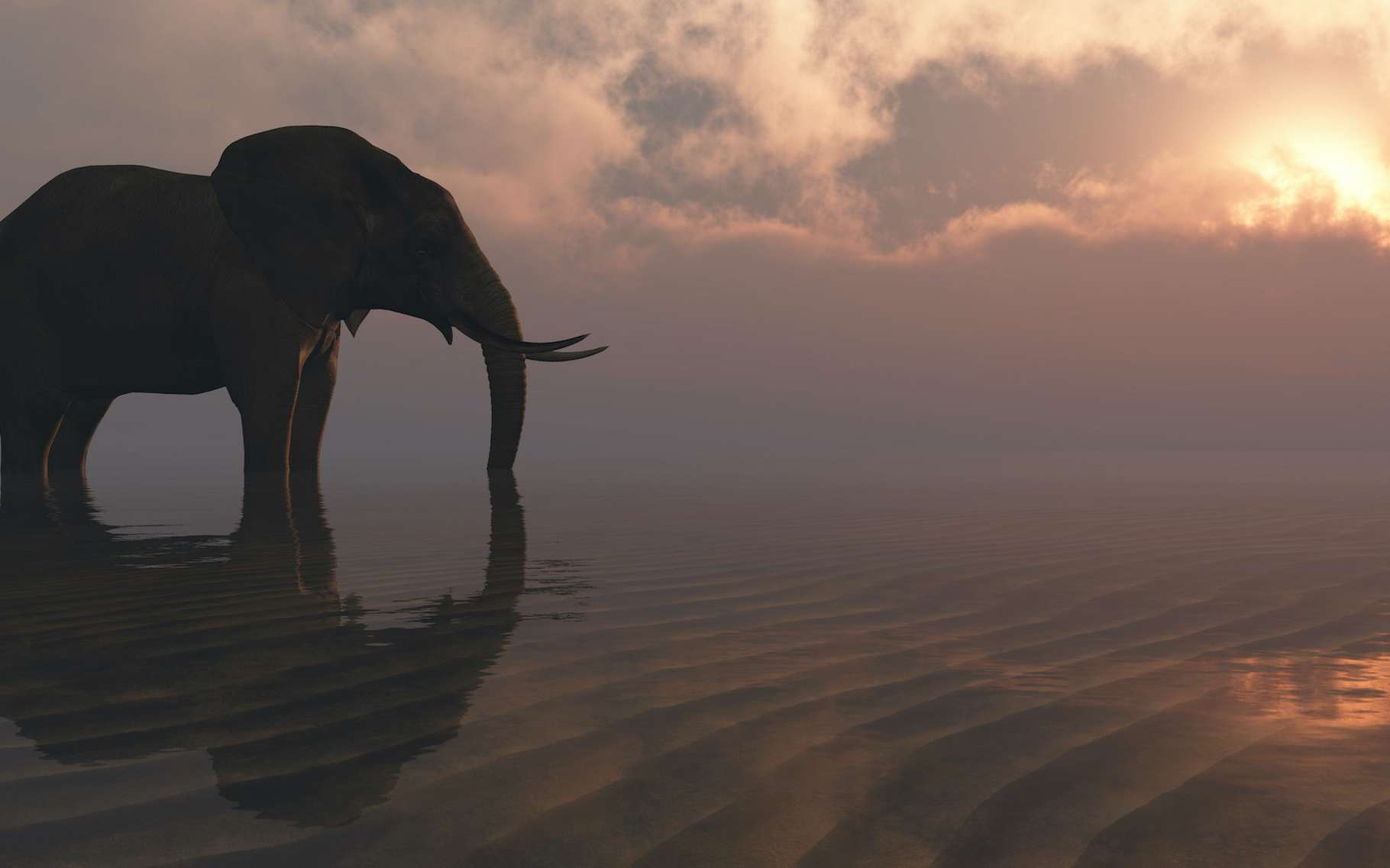 Des chercheurs du Georgia Tech College of Engineering (États-Unis) ont étudié les capacités de succion des éléphants. © juanjo, Adobe Stock