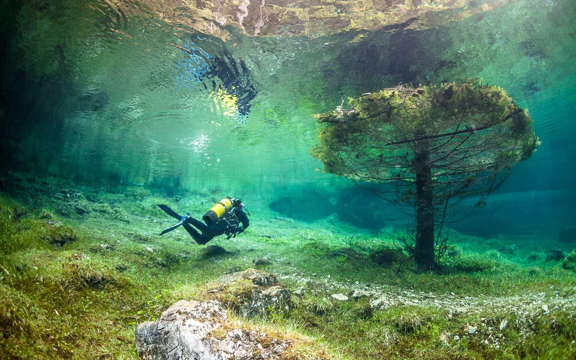 Cet arbre est immergé dans le lac Vert. C'est une étendue d'eau éphémère, l'eau innonde la prairie autrichienne, de mai à juin. © Marc Henauer, www.nitrogenic.com