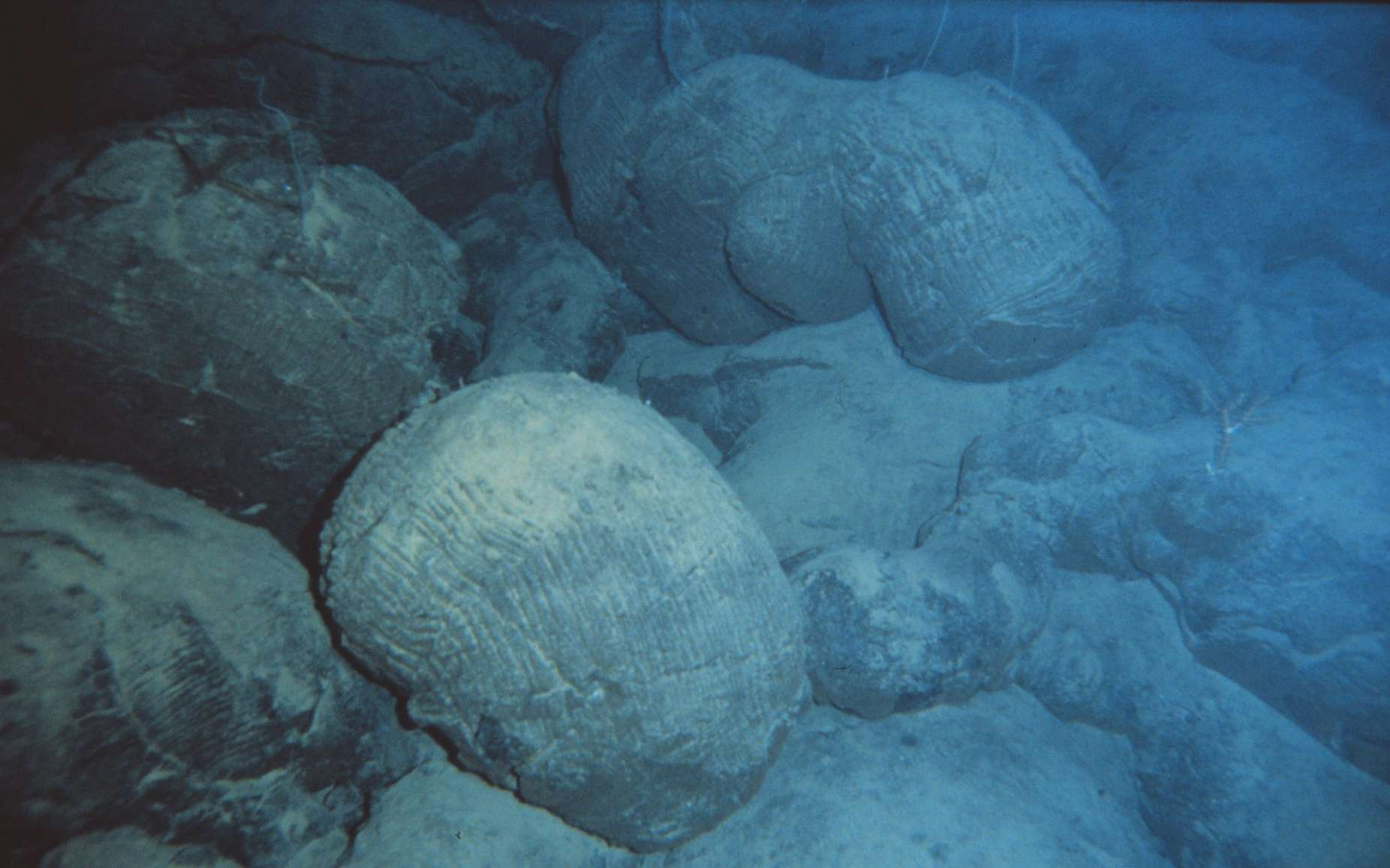 Basaltes en coussin. © NOAA