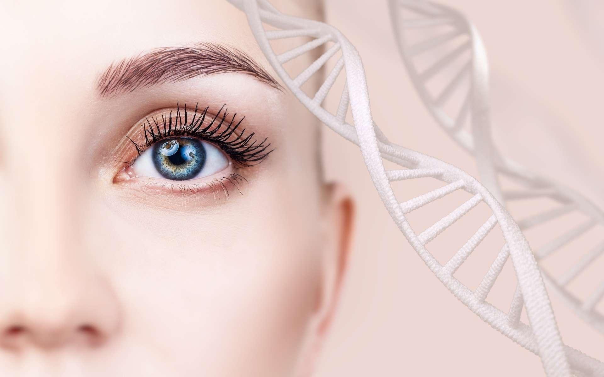 Une thérapie génique innovante pourrait redonner la vue à des patients atteints d'une maladie héréditaire et rare, une pathologie qui conduit brutalement à la cécité. © llhedgehogll, Adobe Stock