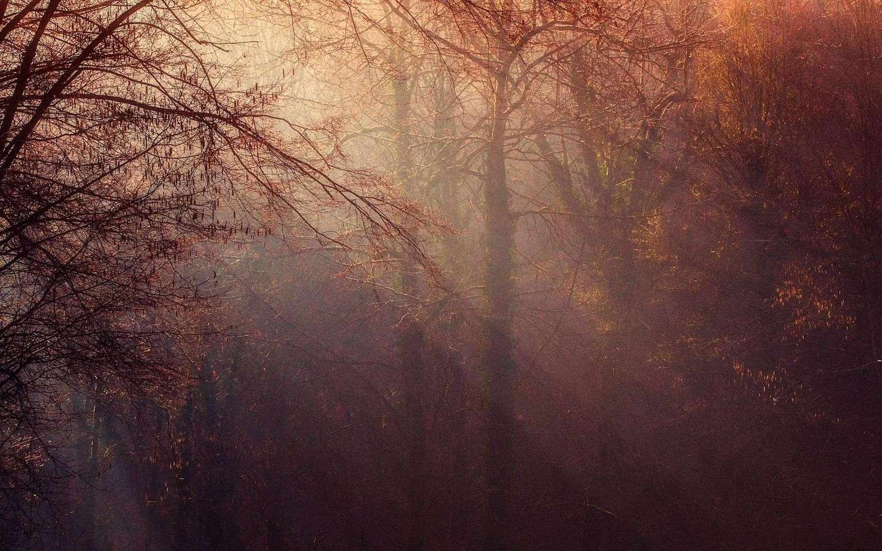 La lumière se comporte tantôt comme une onde, tantôt comme un ensemble de corpuscules. © damesophie, Pixabay, DP