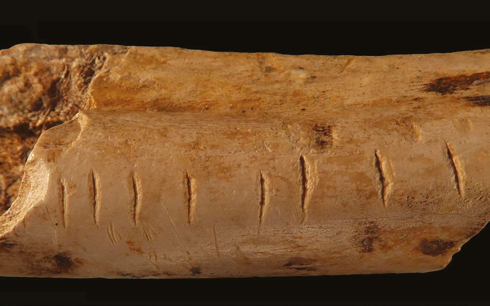 Des marques régulières gravées par Néandertal sur un os de hyène attestent de l'origine ancienne des systèmes de comptage développées par l'Homme. © d'Errico et al., 2018