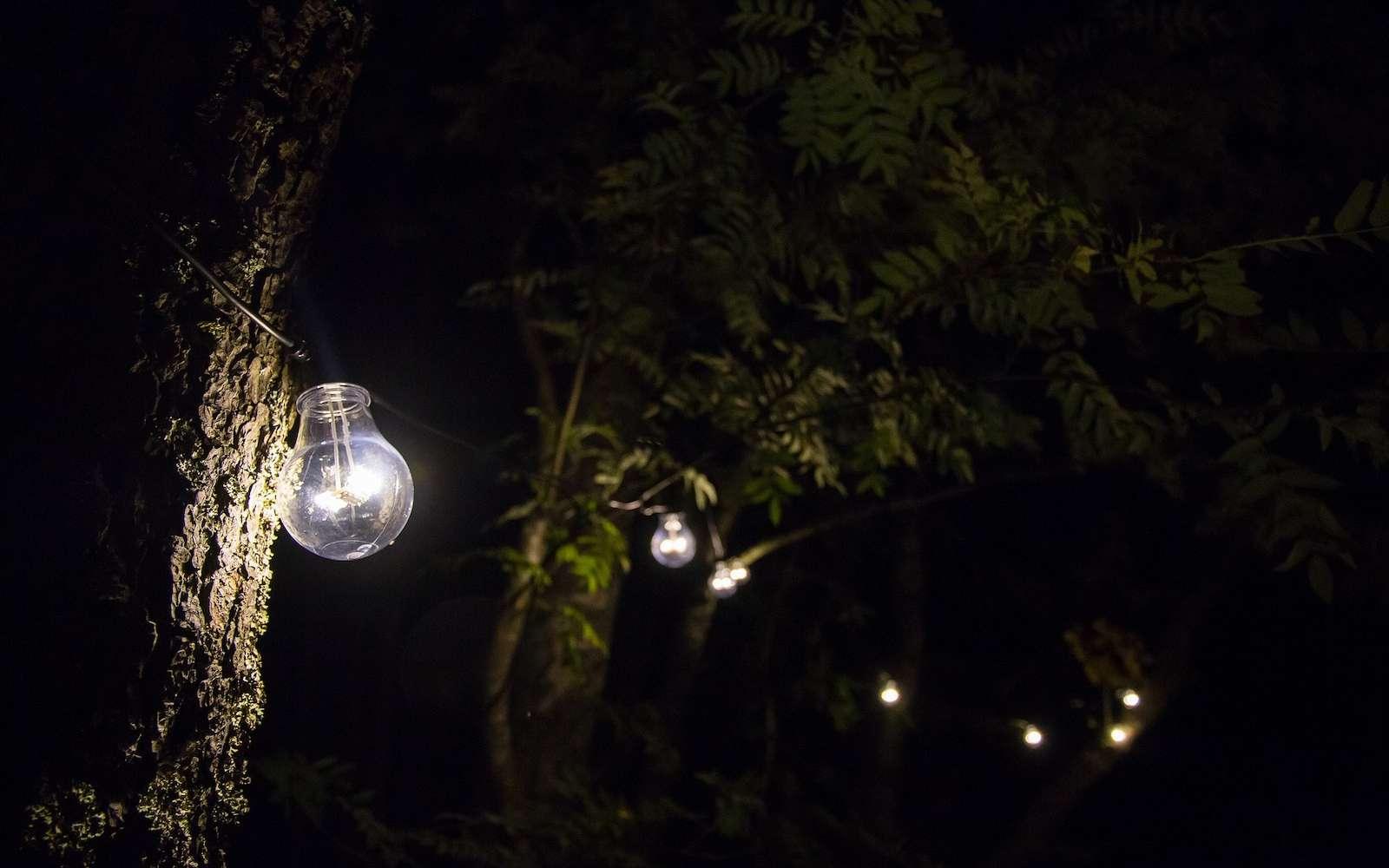 Dans un jardin ou même sur une piscine, l'ampoule LED offre un éclairage doux ou puissant selon les besoins. © kostiolavi, pixabay