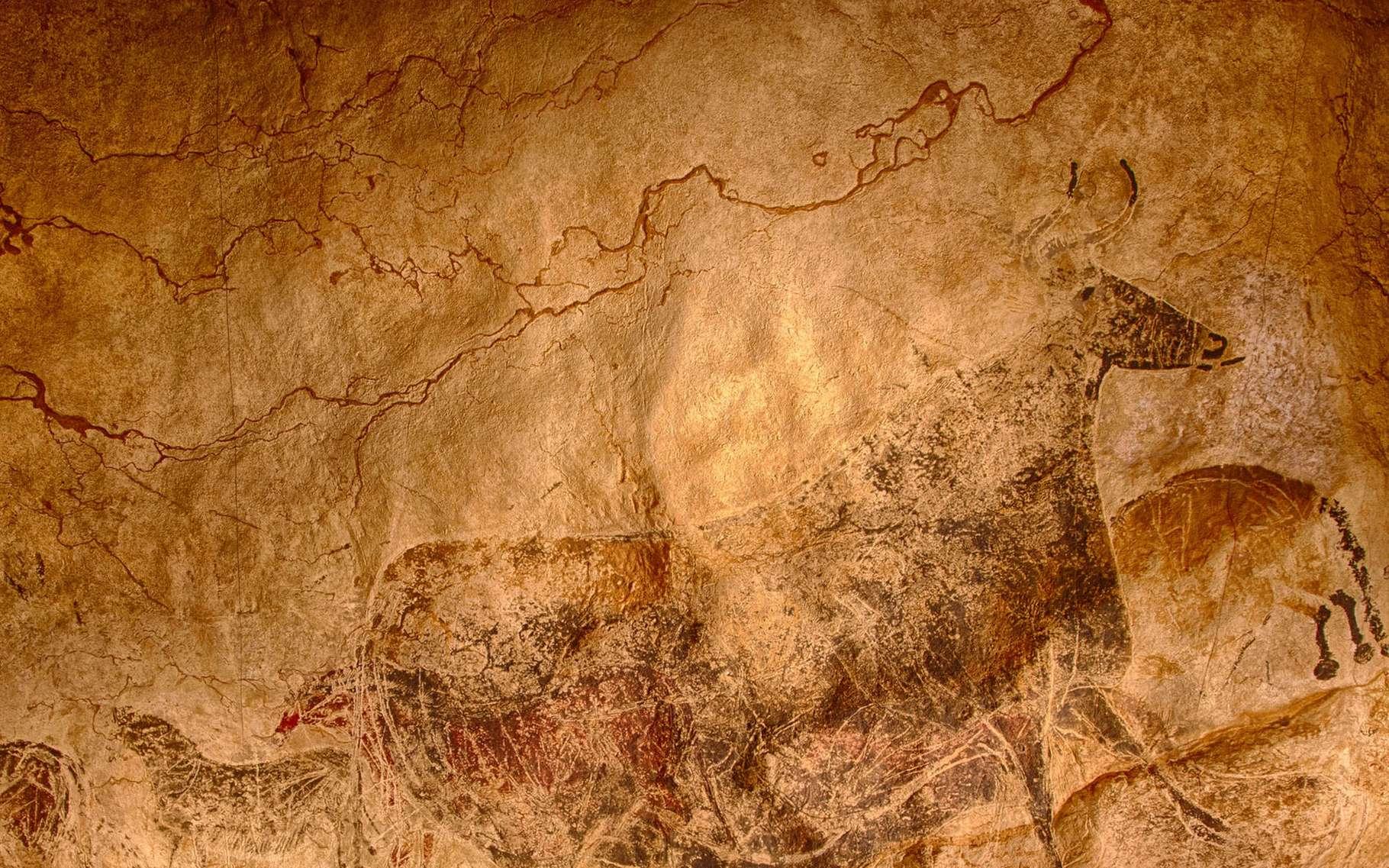 Une photo d'une reproduction de la Grotte de Lascaux. Il s'agit d'une partie du panneau dit de « La Grande Vache noire » dans la salle dite de « la Nef». La vache est en réalité un aurochs dont la taille sur la paroi est de 220 cm. © Randall Pugh, CC by-nc 2.0