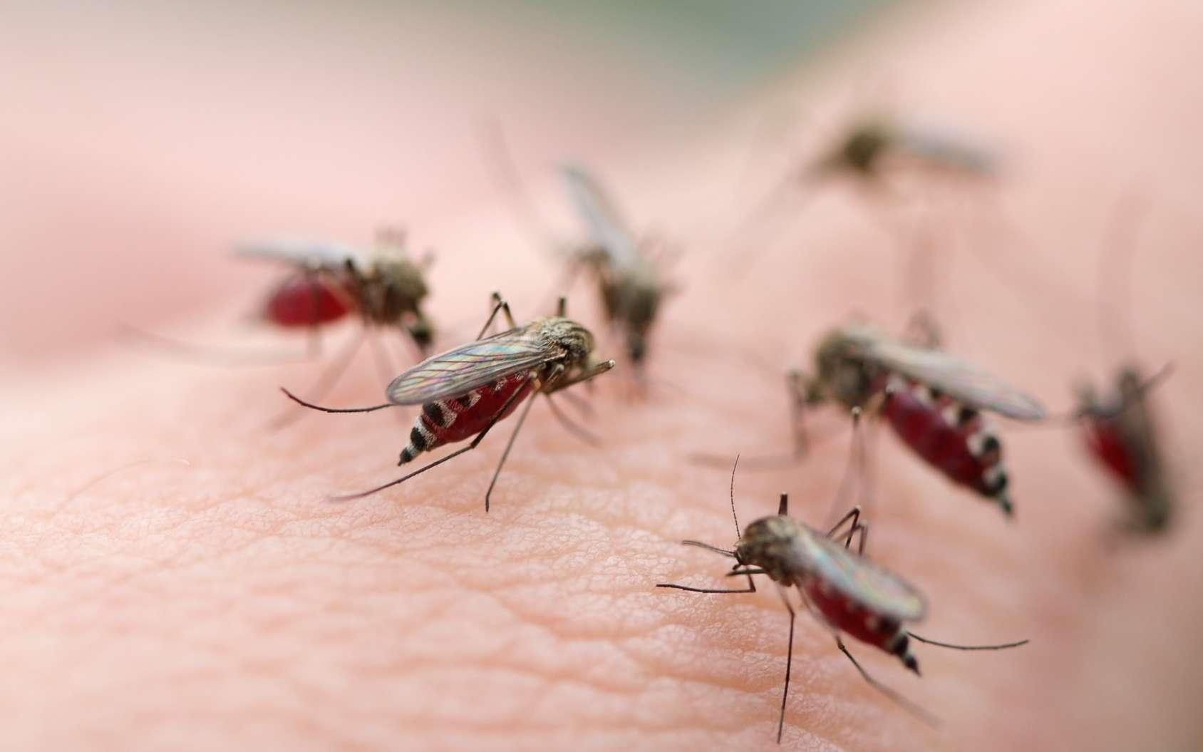 De nombreux moustiques piquent la peau d'un homme ©Fotolia