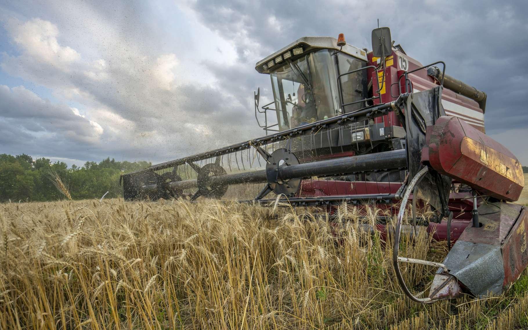 La part des émissions de gaz à effet de serre des terres émergées est importante. Mais ces dernières contribuent aussi à stocker une partie du carbone atmosphérique. © Игорь Кляхин, Fotolia