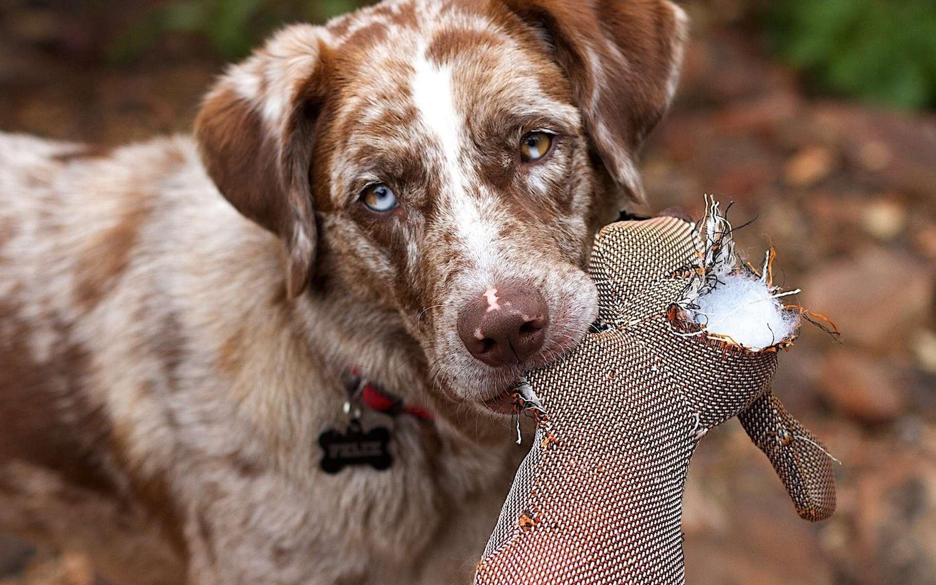 Des chercheurs japonais prétendent que les chiens sont capables de différencier le bien du mal dans un comportement humain. © skeeze, Pixabay, CC0 Public Domain