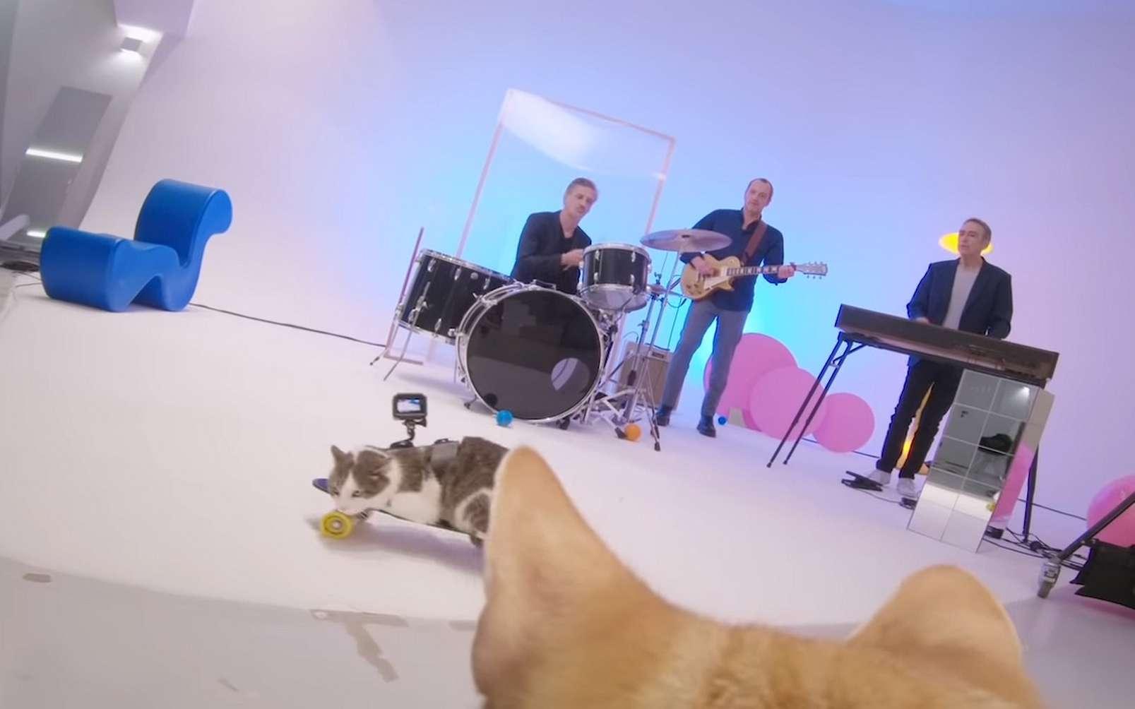Les chats caméramen qui ont filmé le clip « Tout est pop » d'Alain Chamfort. © Alain Chamfort