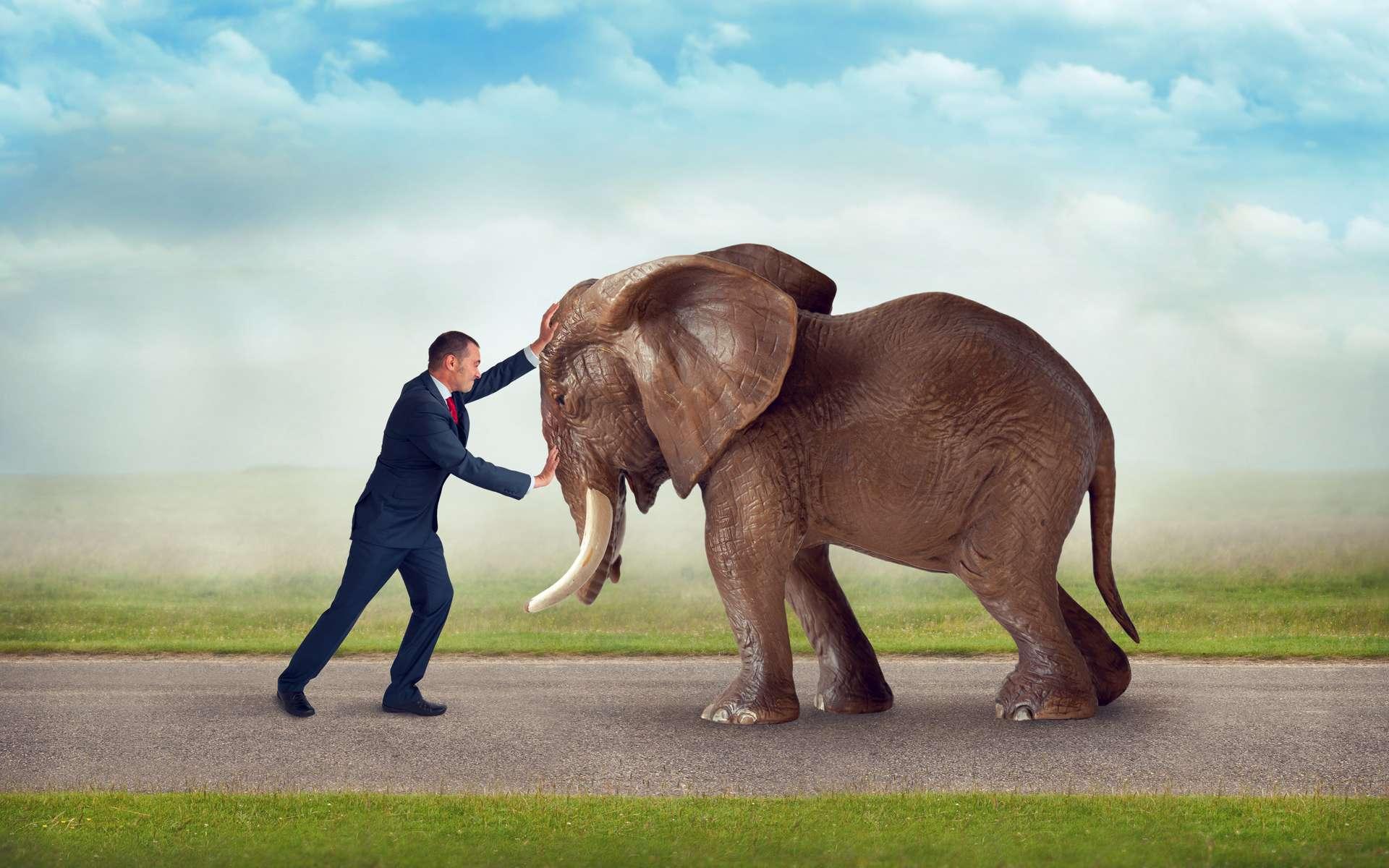 Les conflits entre l'Homme et la faune sauvage s'accentuent à cause des événements climatiques extrêmes. © eelnosiva, Adobe Stock