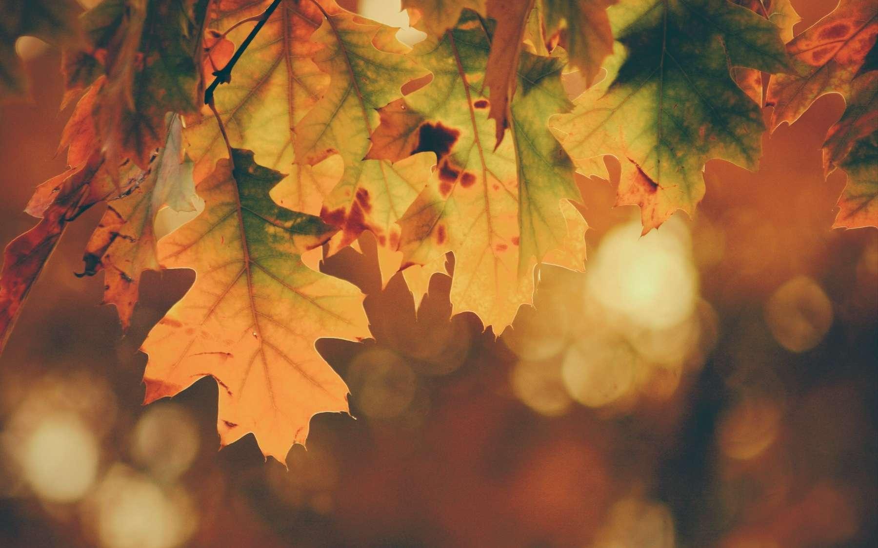 D'ici la fin du siècle, les arbres perdront leurs feuilles entre trois et six jours plus tôt. © Timothy Eberly, Unsplash