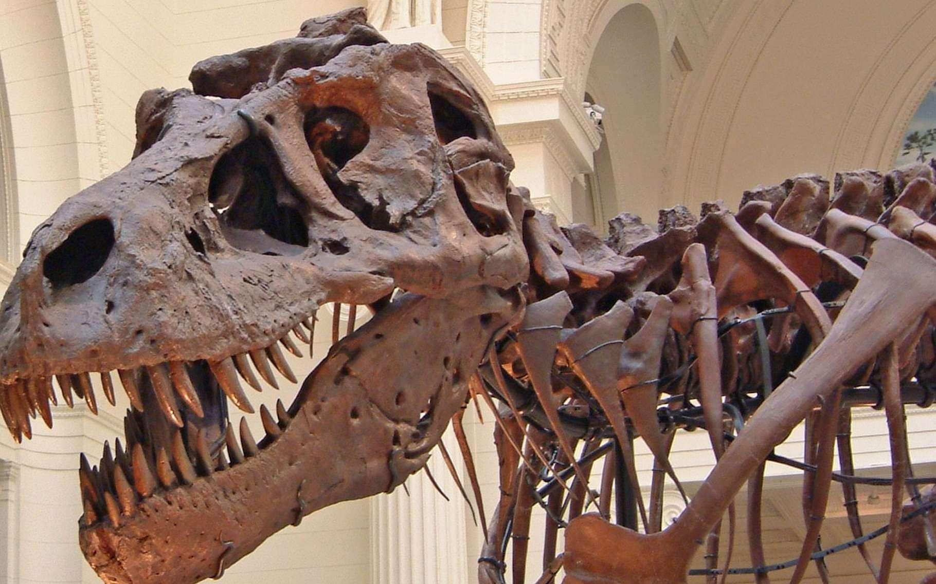Chilesaurus diegosuarezi (du moins une reconstitution présumée). Il ressemble à un tyrannosaure mais son régime était végétarien. © University of Birmingham