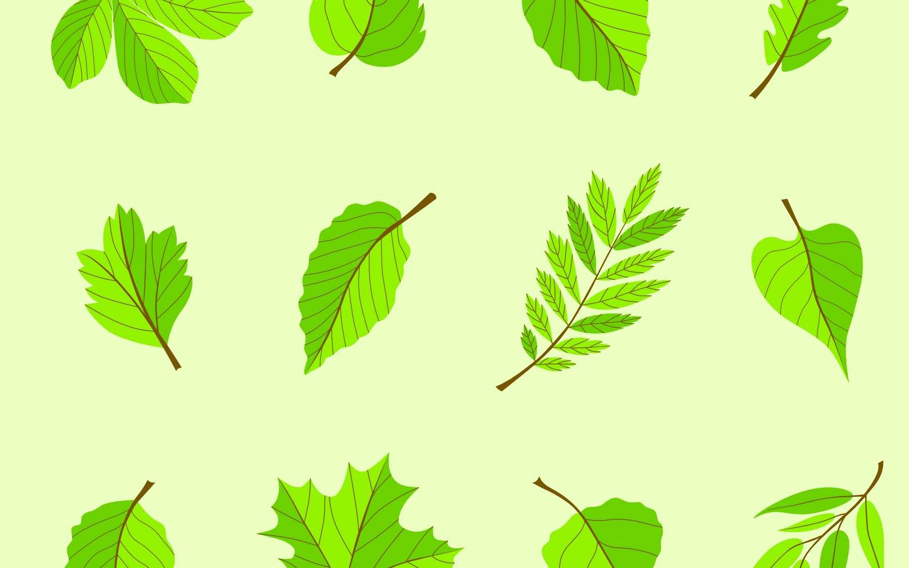 Chaque espèce d'arbre possède sa propre forme de feuille, adaptée à son environnement. © Boyko.Pictures, Adobe Stock