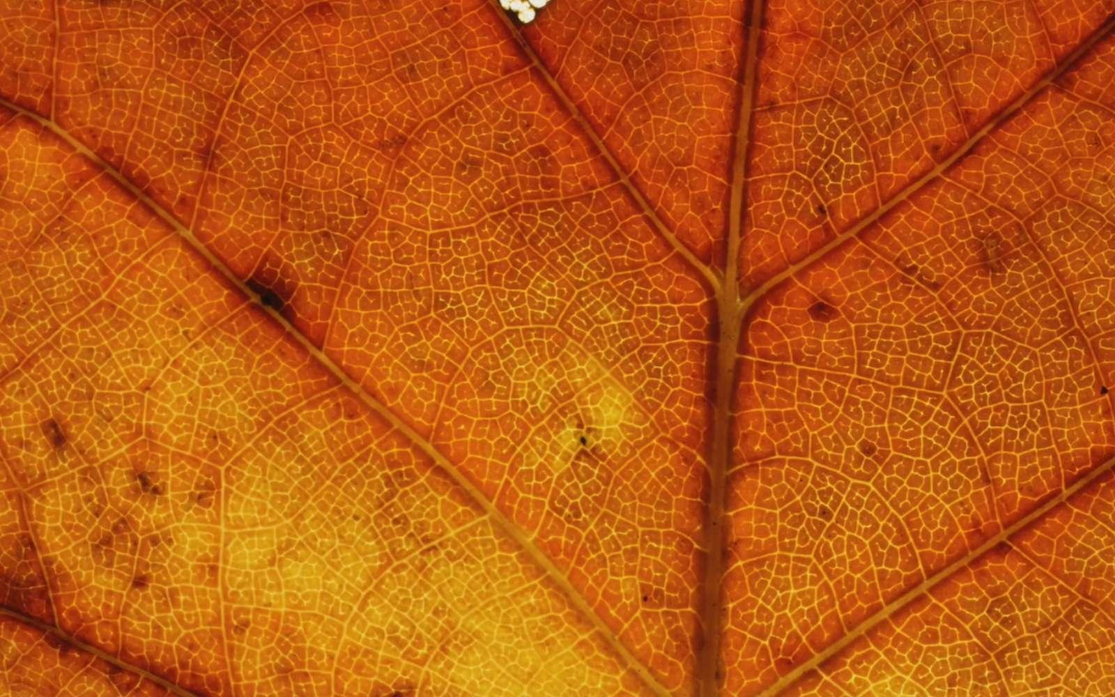 La coloration des feuilles d'automne vue en Timelapse. © Owen Reiser