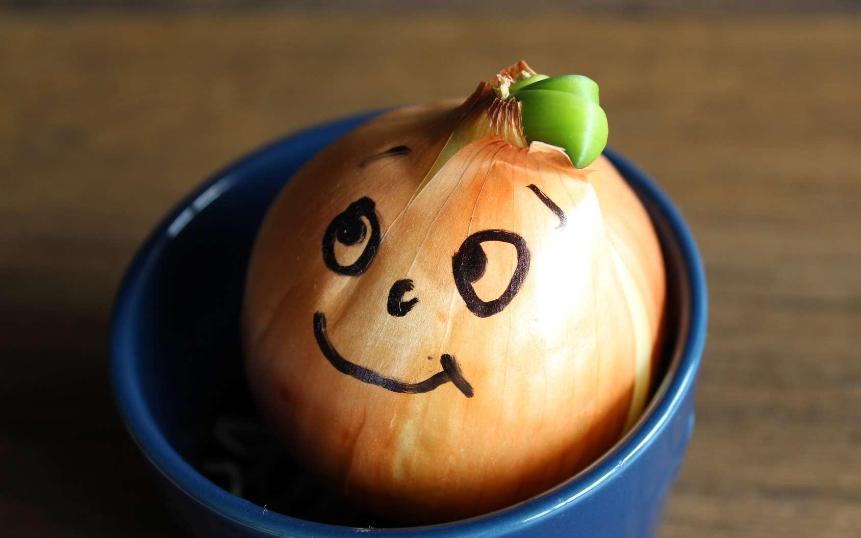 Couper un oignon lorsque l'on cuisine fait pleurer. Cela est dû à la formation d'un gaz irritant : le sulfate d'allyle. © Татьяна Тихомирова, fotolia