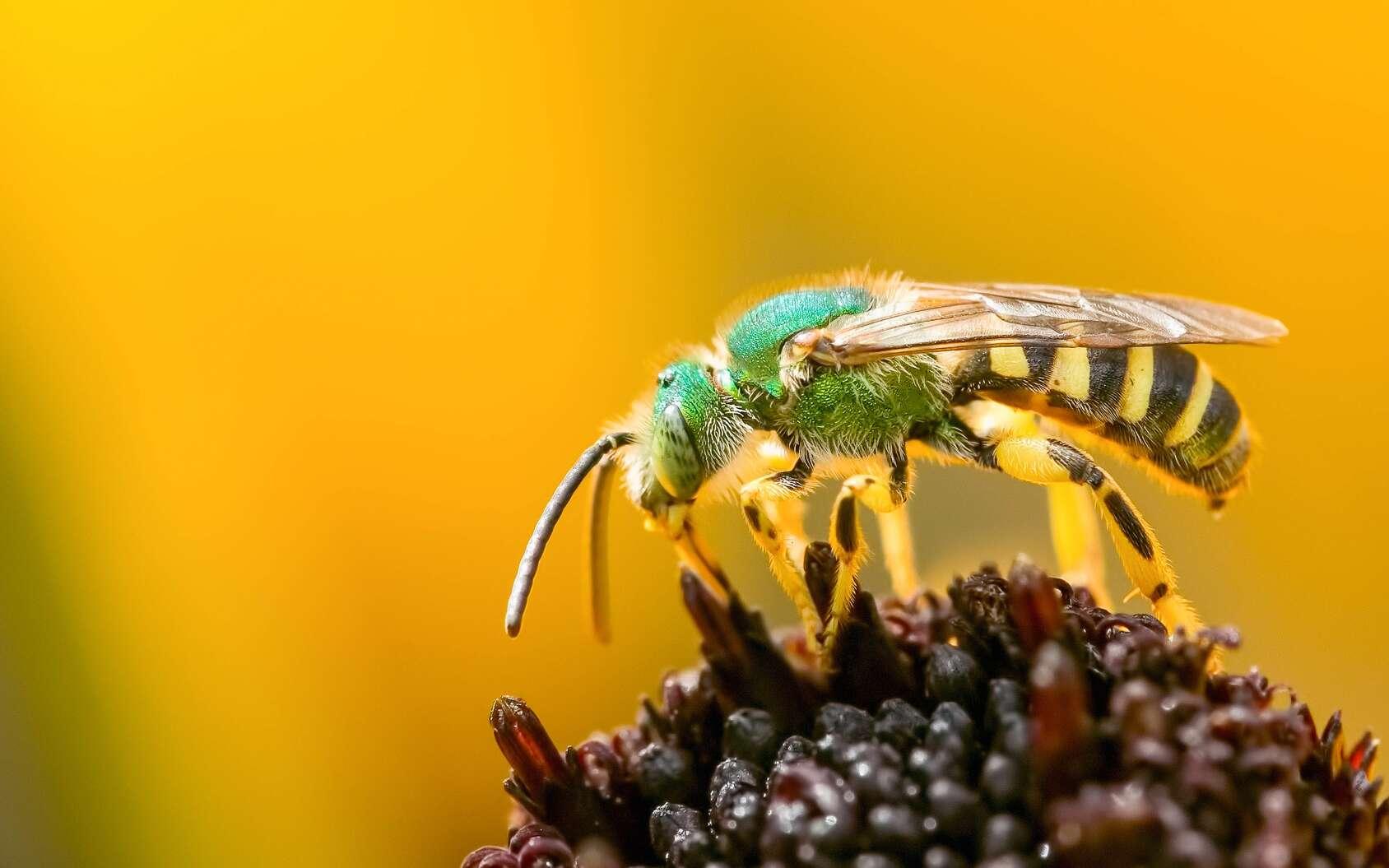 L'entomologiste est un spécialiste des insectes, chargé d'étudier les espèces et notamment leur rôle dans les écosystèmes. © Luc Pouliot, Fotolia.