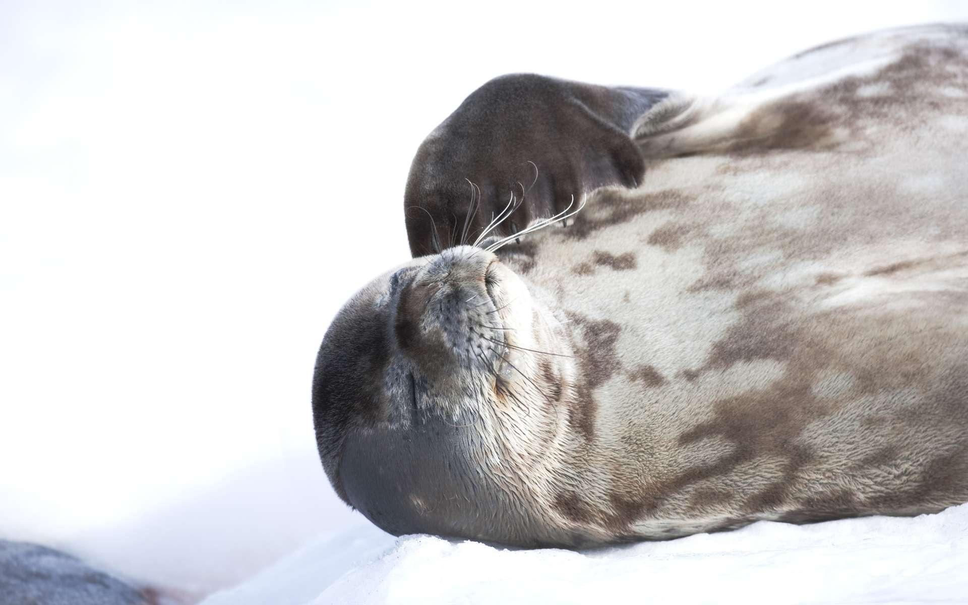 La biomasse de l'Antarctique est l'une des plus importantes de la planète. On compte 300 espèces de poissons différentes, 40 espèces d'oiseaux et 8 espèces de cétacés. © John B. Weller courtesy The Pew Charitable Trusts