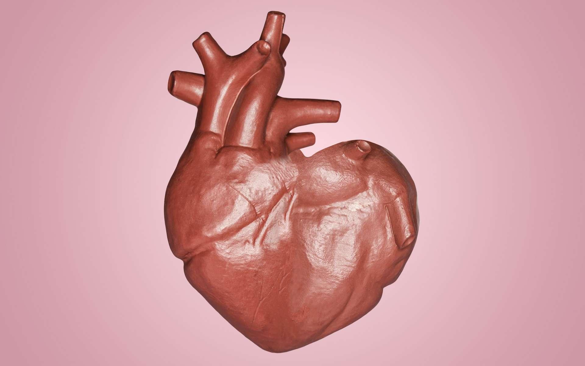 L'endocardite est une inflammation de l'endocarde, la paroir interne du cœur. © Nitiphol, Adobe Stock