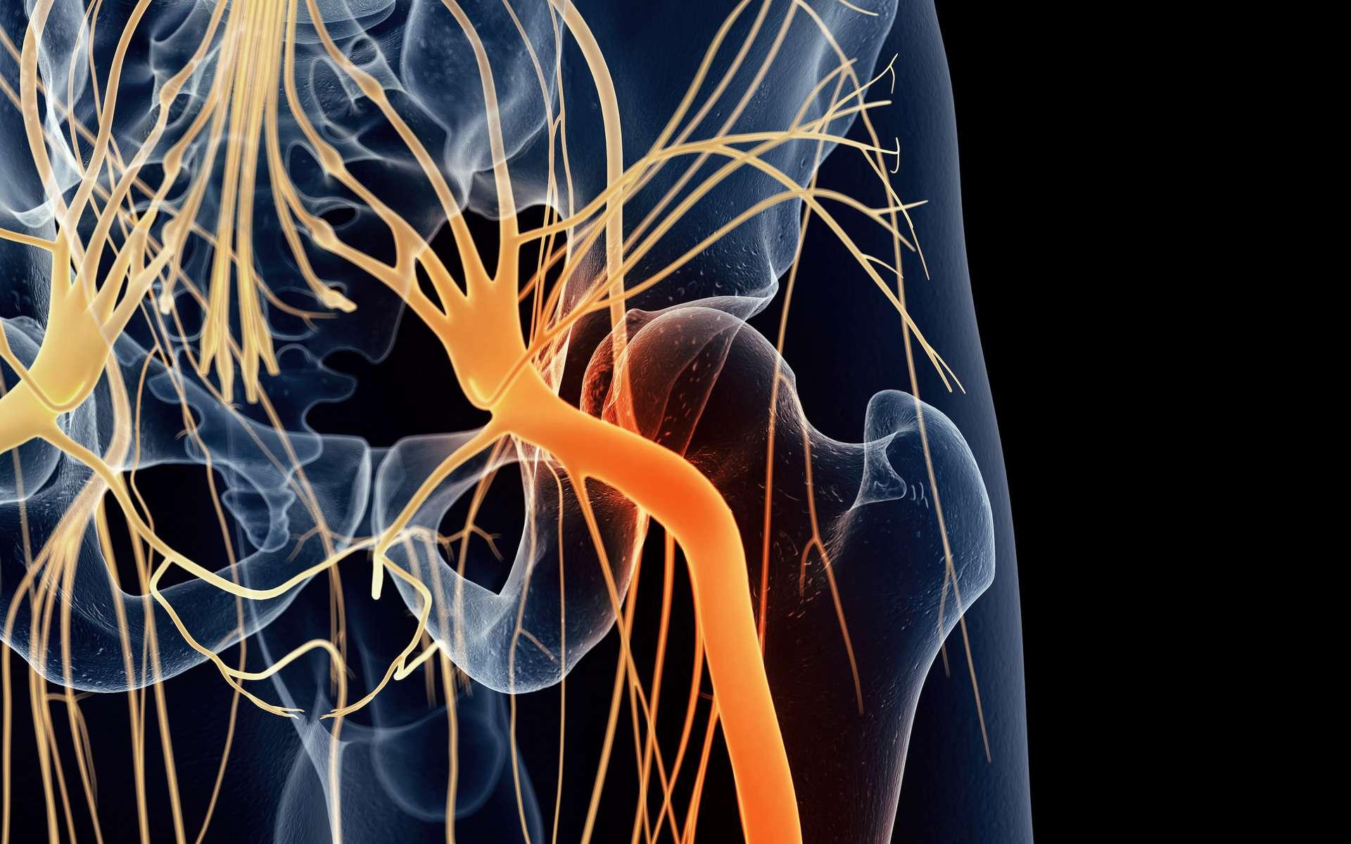 La cruralgie se traduit par une vive douleur à la cuisse. © Sebastian Kaulitzki, Adobe Stock