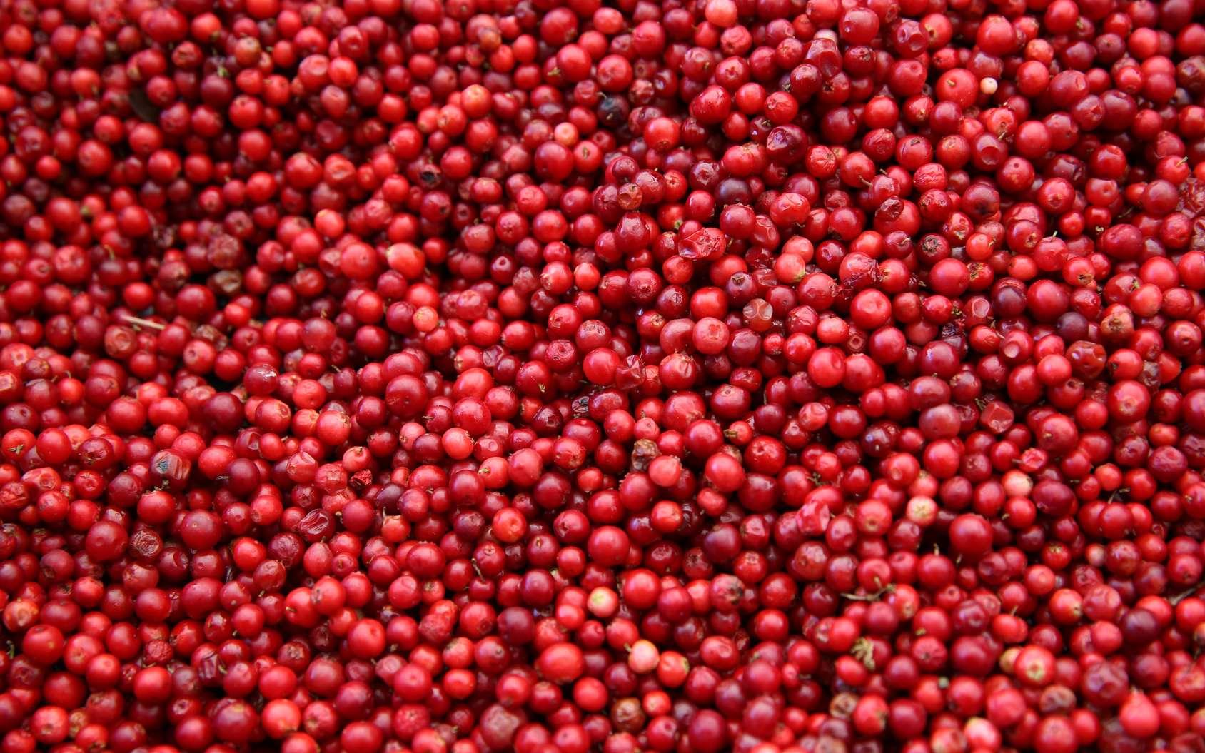 La canneberge est le nom canadien de cranberry. © Benshot, Fotolia