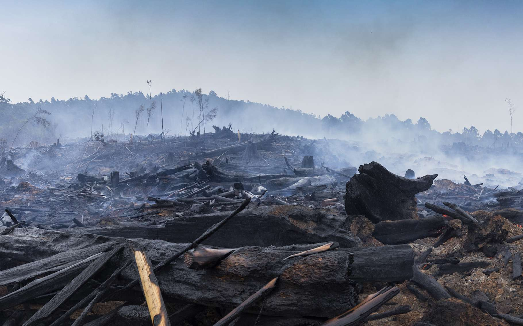 Le CO2 émis par les incendies en Australie voyagera tout autour de la planète et participera à l'établissement de nouveaux records de concentration atmosphérique. © jamenpercy, Adobe Stock