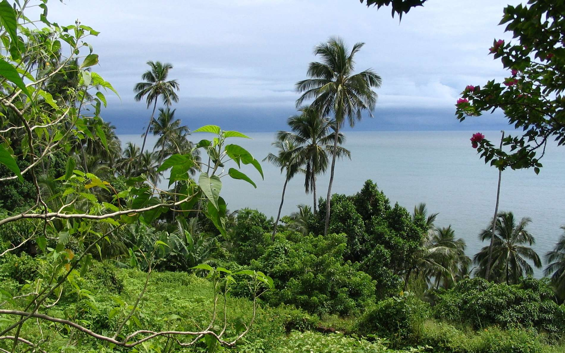 Ile Royale en Guyane fait partie des trois îles du Salut, ancien bagne ; vue depuis l'île vers l'océan. © Wikimedia Commons, domaine public