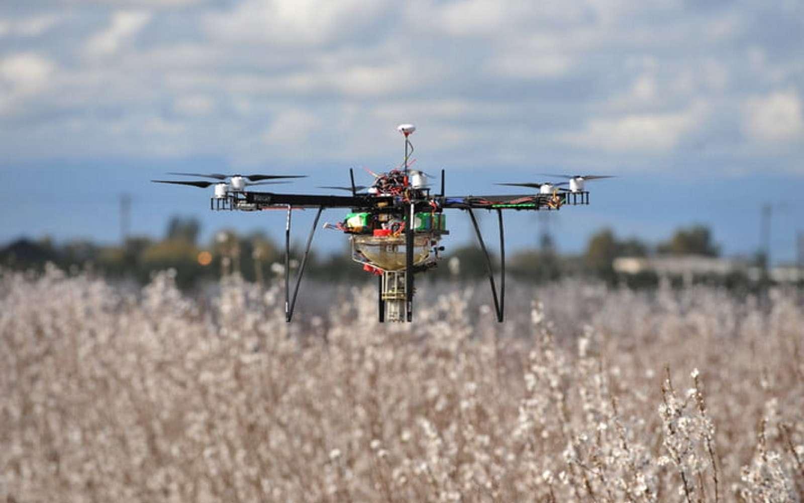 Le drone de Dronecopter peut polliniser jusqu'à 16 hectares en une heure. Sa vitesse est adaptée pour optimiser la pulvérisation du pollen. © Dronecopter