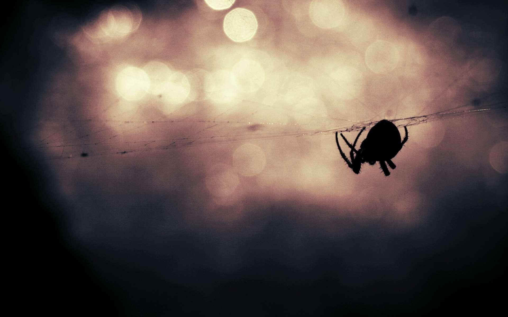 Quelque 15 à 50 % des personnes seraient concernées par l'arachnophobie. © CC0 1.0, domaine public