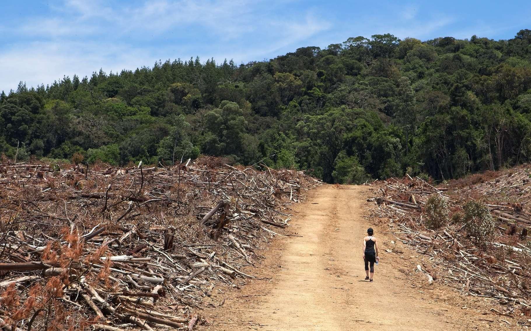 La dégradation des écosystèmes — par la déforestation, par exemple — pourrait augmenter le risque et l'impact des pandémies. © Matthew, Adobe Stock