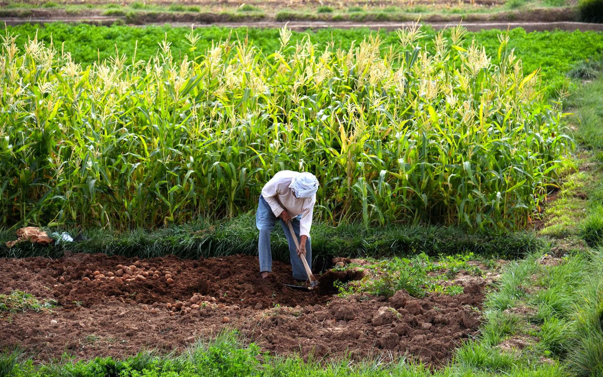 L'agriculture vivrière représente 80 % des exploitations agricoles dans le monde. © monticellllo, Adobe Stock