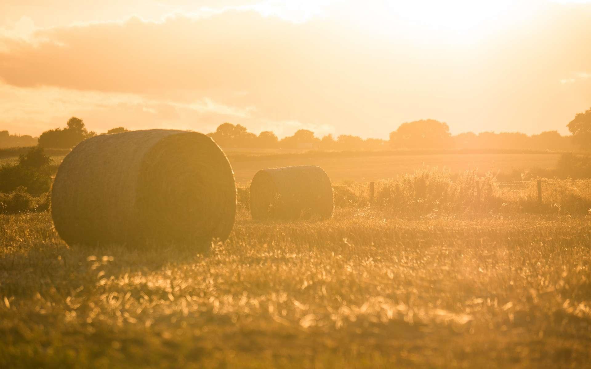 Limiter le rayonnement solaire a un effet bénéfique sur les cultures. © Stephen Radford, Unsplash